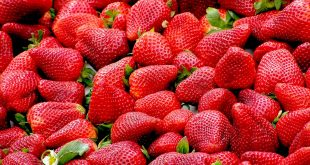 agricultura fresas
